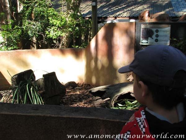 Currumbin Wildlife Sanctuary 1