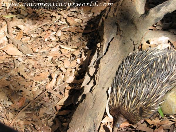 Currumbin Wildlife Sanctuary 2