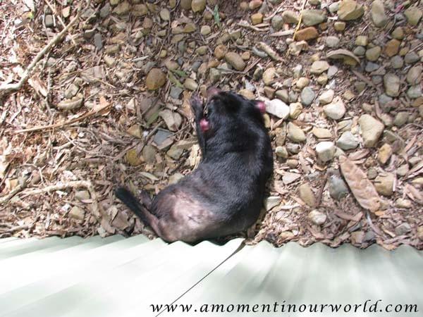 Currumbin Wildlife Sanctuary 3