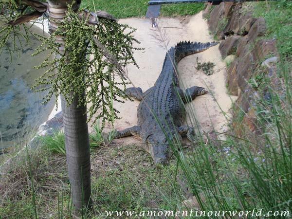 Currumbin Wildlife Sanctuary 8