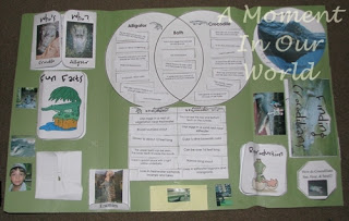 Crocodile Lapbook
