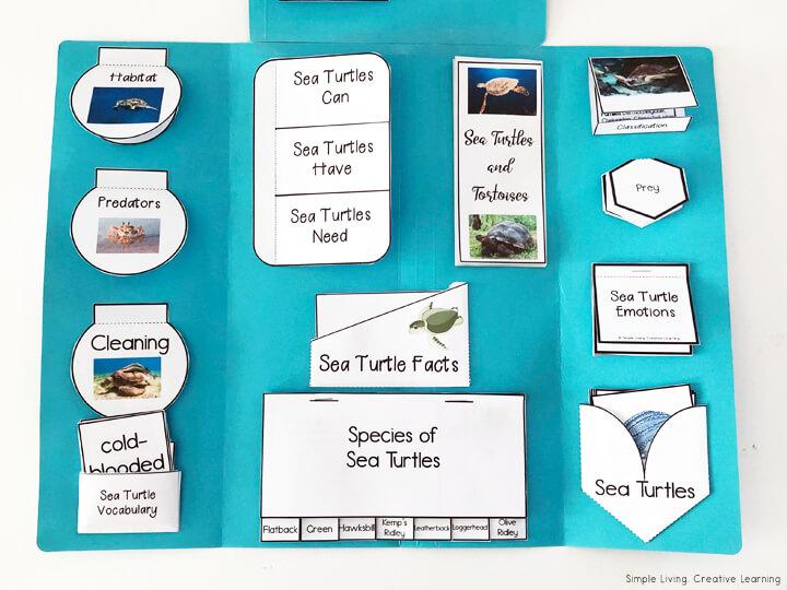 Sea Turtle Lapbook