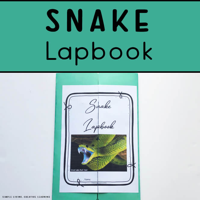 Snake Lapbook