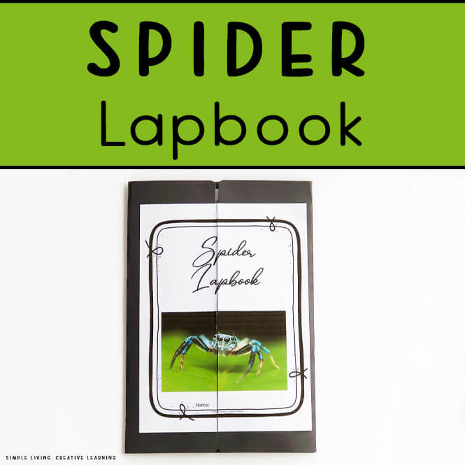 Spider Lapbook