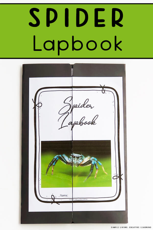 Spider Lapbook