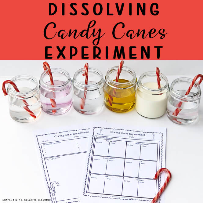 Dissolving Candy Cane Science Experiment