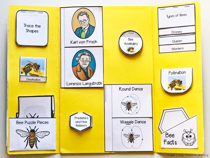 Bee Lapbook