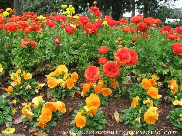 Carnival of Flowers 1