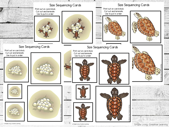 Turtle Size Sequencing Cards