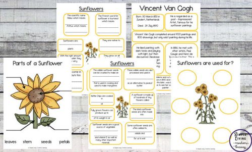 Sunflower Study