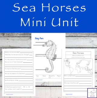 Learn about these incredible creatures that are able to propel themselves by using the small fin on their back while completing this Sea Horse Mini Unit