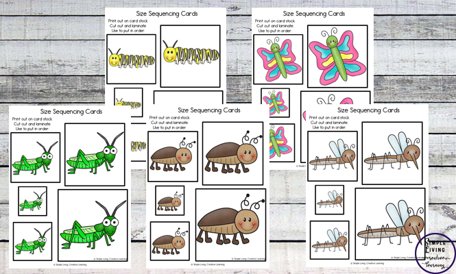Kids love collecting and watching bugs and insects and they will love practicing size sequencing with these bug and insect size sequencing cards.