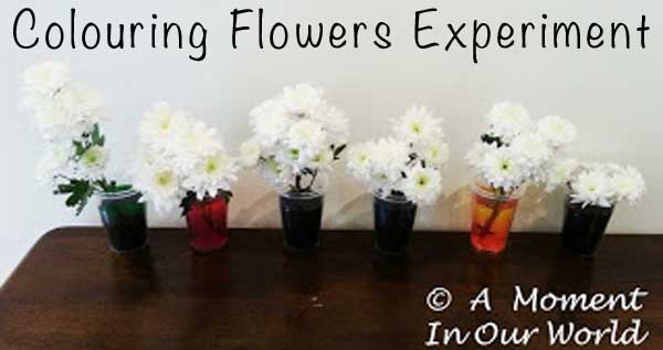 Colouring Flowers - Science Experiment