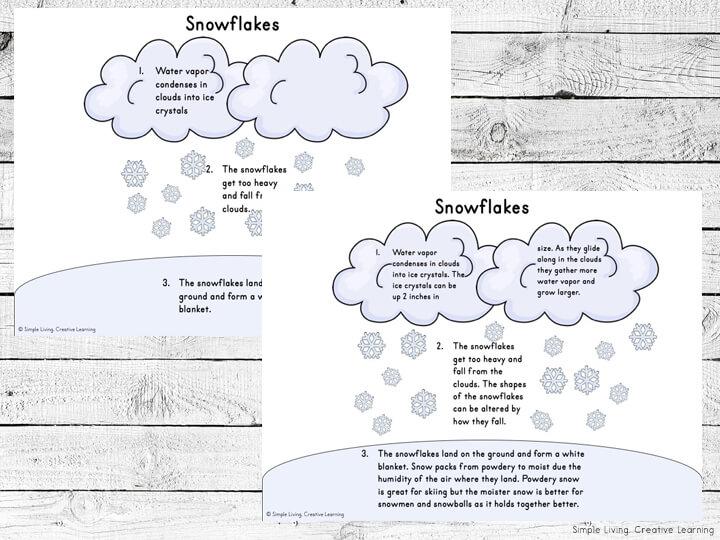 Snowflake Life Cycle Activity