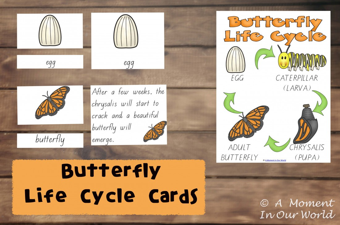 Butterfly Life Cycle Cards - Simple Living. Creative Learning