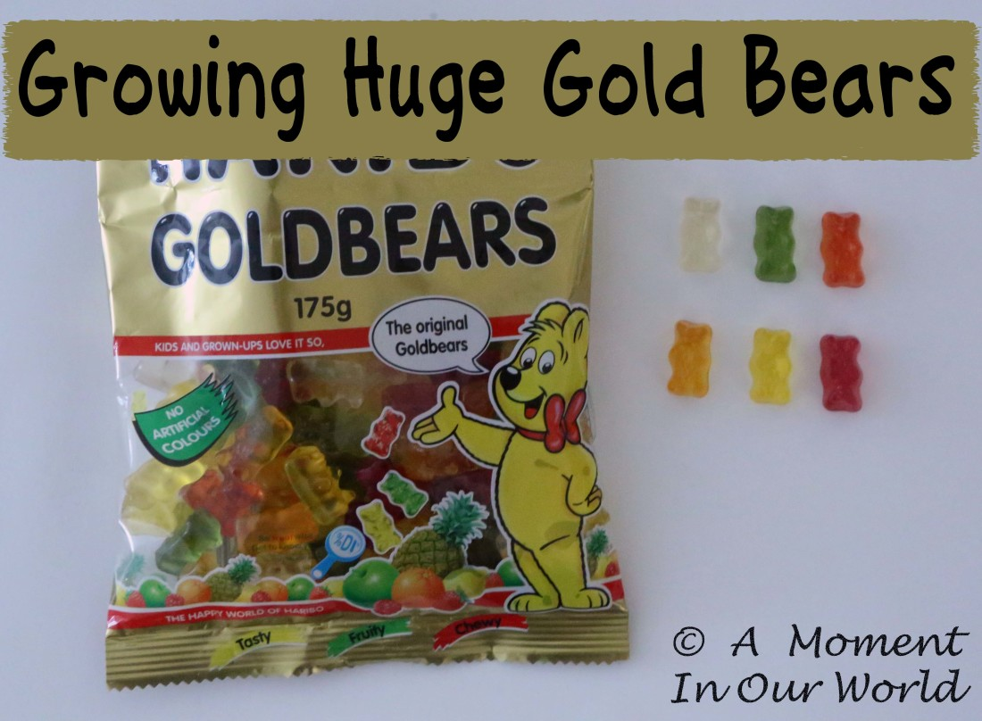 Growing Huge Gold Bears