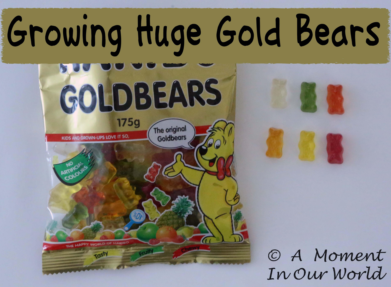 Growing Huge Gummy Bears