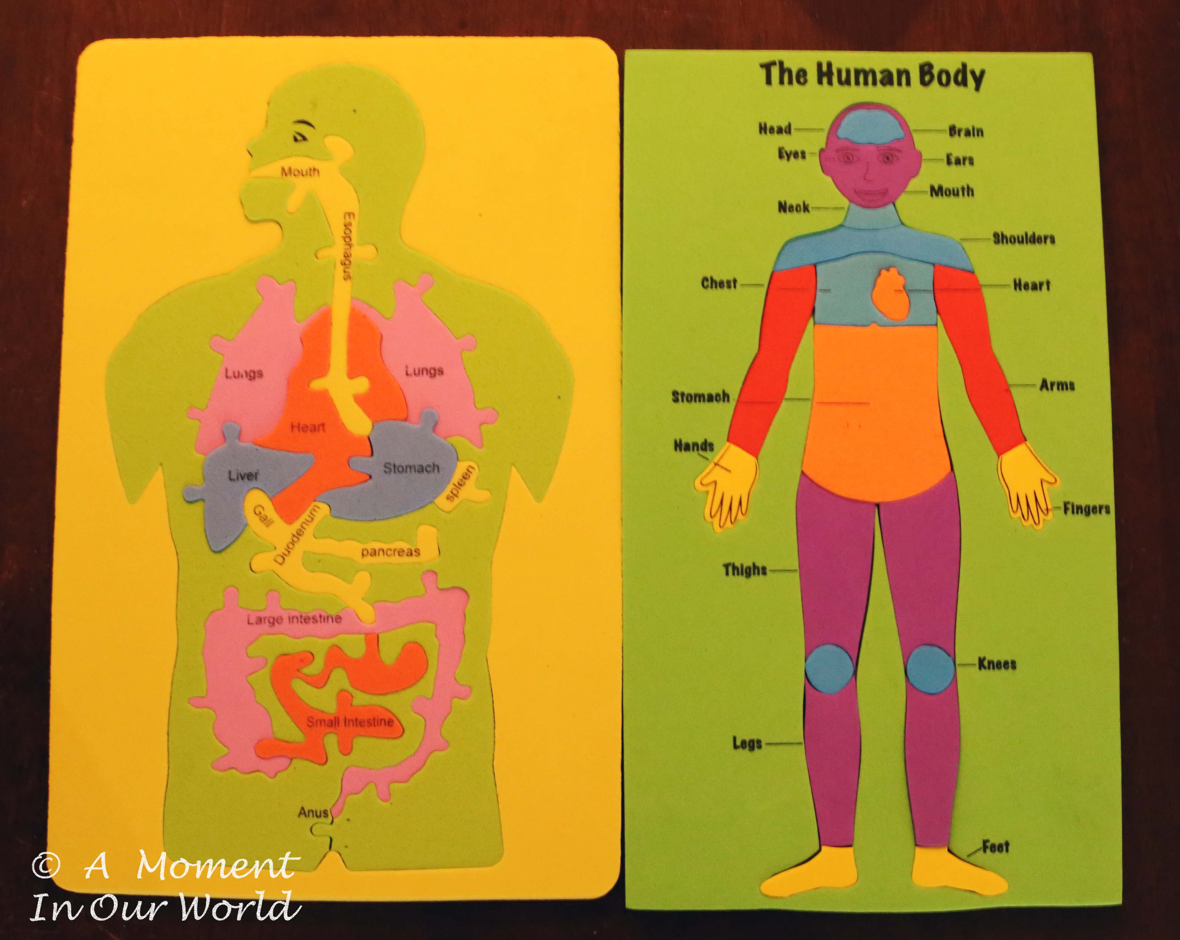 Human Body ~ Body Parts - Simple Living. Creative Learning