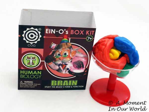 Brain Kit