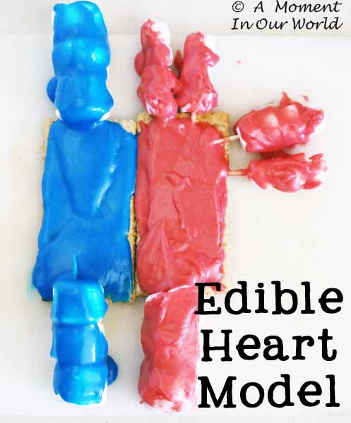 Edible Heart Model 1