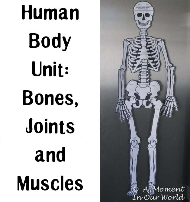 Have fun learning about the Bones, Joints and Muscles with this fun printable pack.