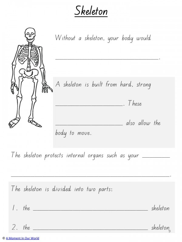 Human Body Bones Joints And Muscles Simple Living Creative Learning