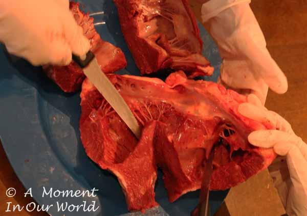 ox heart 3
