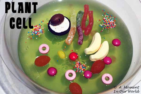 plant cell a