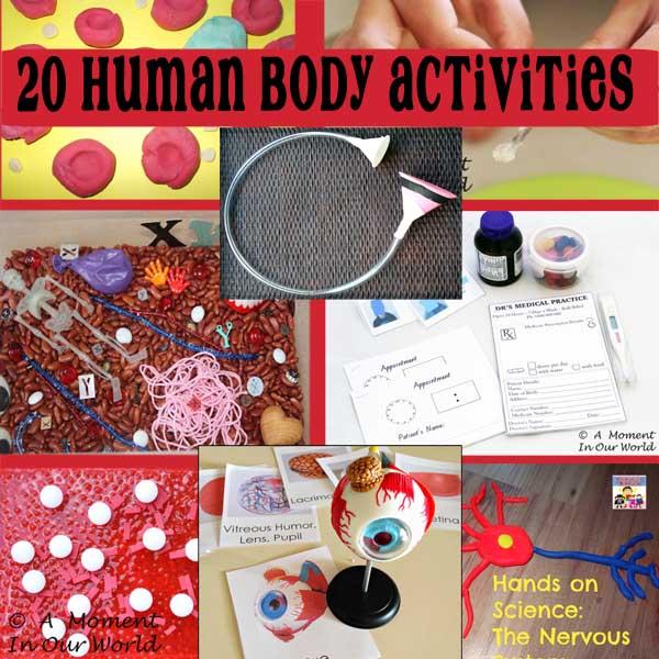 20 Human Body Activities