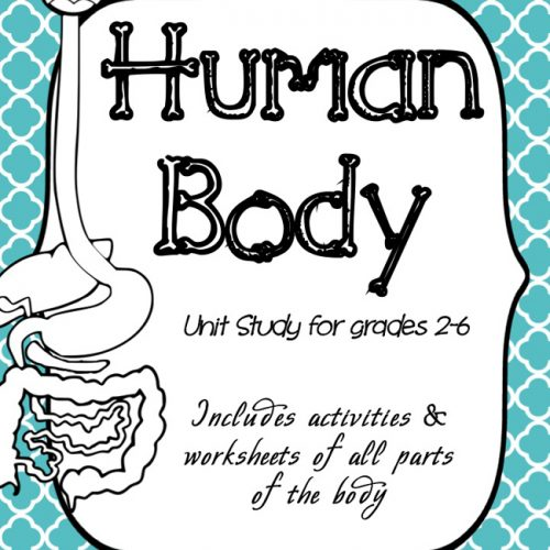 You will learn lots about the human body with this amazing, in-depth human Body Unit Study.
