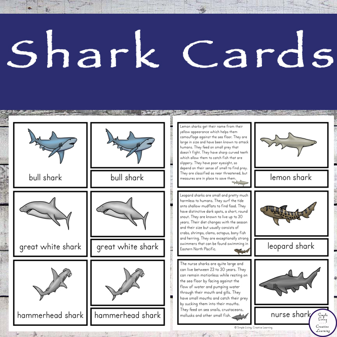 These shark cards contain information for ten of the most popular sharks.