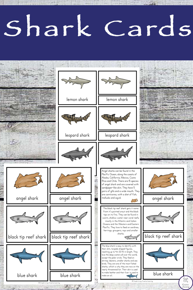 This shark cards contain information for ten of the most popular sharks.