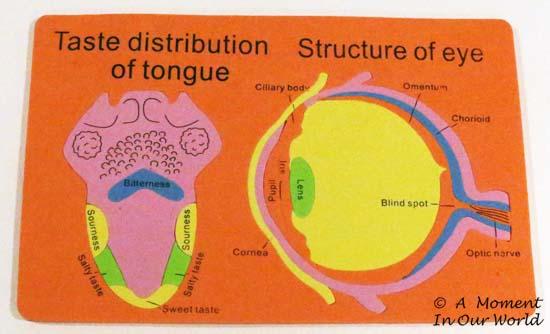 Tongue and Eye
