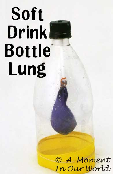 Make this fun Bottle Lung while learning about the respiratory system.
