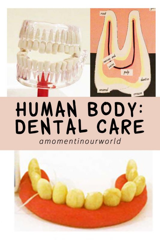There are many activities that you can do with your child to help them learn about dental care.