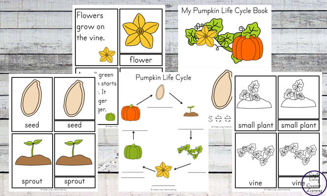 image about Life Cycle of a Pumpkin Printable identify Expand a Pumpkin inside a Pumpkin + Pumpkin Lifetime Cycle Printables