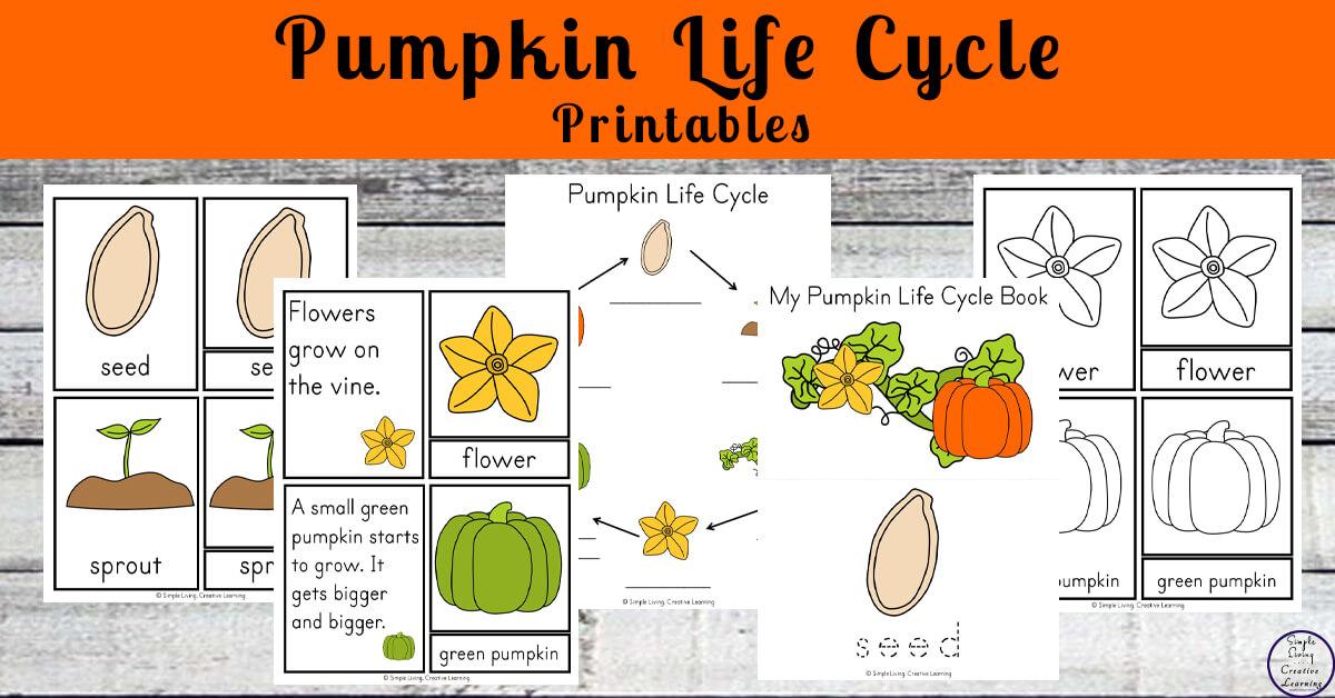 grow a pumpkin in a pumpkin + pumpkin life cycle printables - simple  living  creative learning