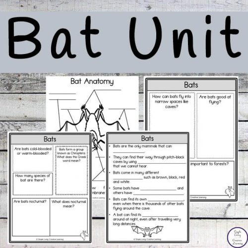 This Bat study contains pages on seven different bats such as the Bumblebee Bat, the California Leaf-Nosed Bat, the Vampire Bat and the Spotted Bat.