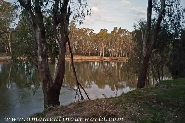 Murray River Tocumwal 1