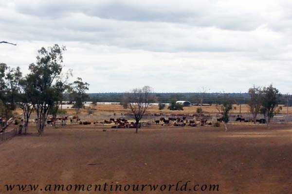 Roma Saleyards from the Road