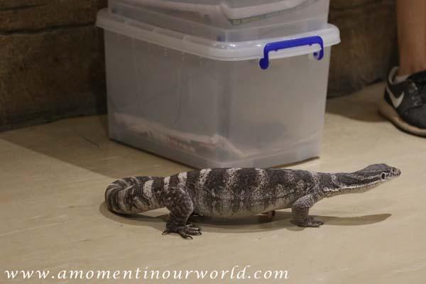 AS Reptile Centre 19