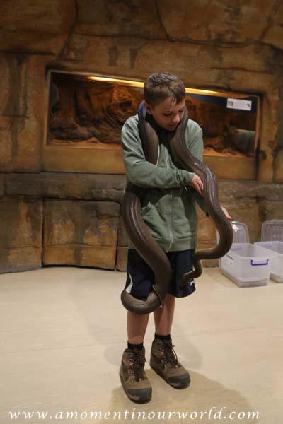 AS Reptile Centre 20
