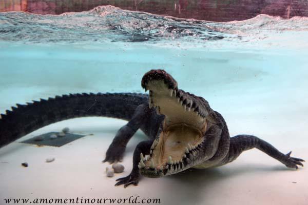 AS Reptile Centre 49