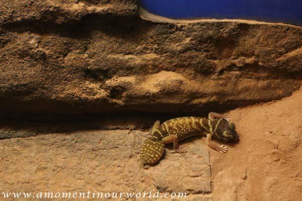 AS Reptile Centre 5