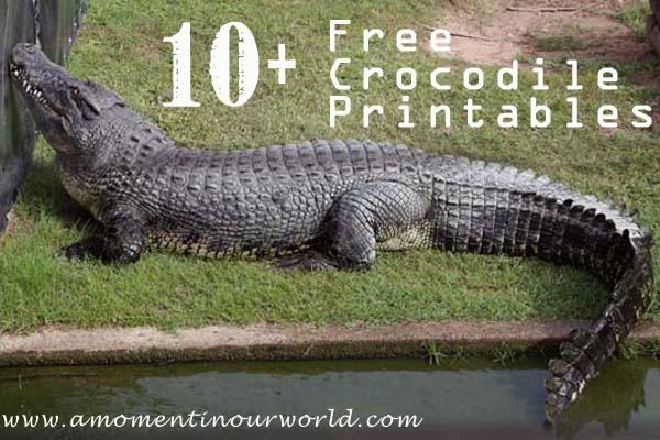 10+ {FREE} Crocodile Printables