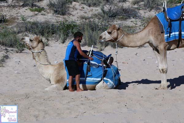 Camel Ride 10