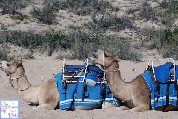 Camel Ride 14
