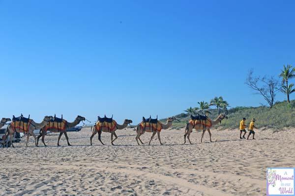 Camel Ride 20