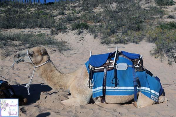 Camel Ride 22