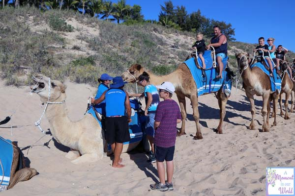 Camel Ride 24